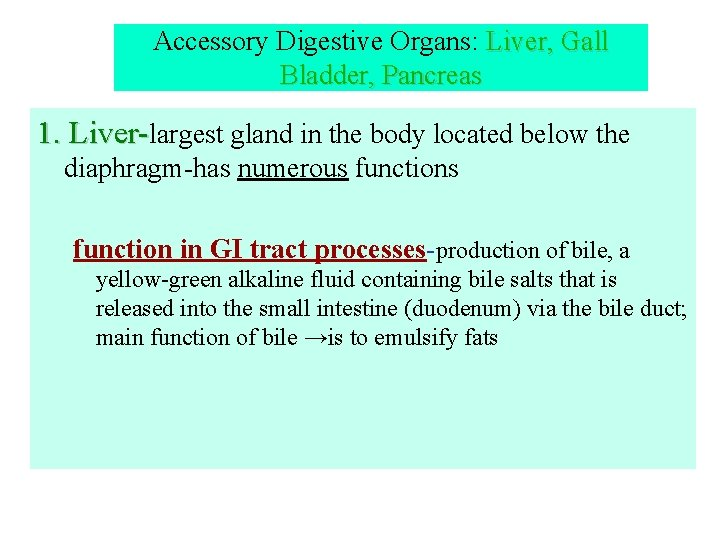 Accessory Digestive Organs: Liver, Gall Bladder, Pancreas 1. Liver-largest gland in the body located