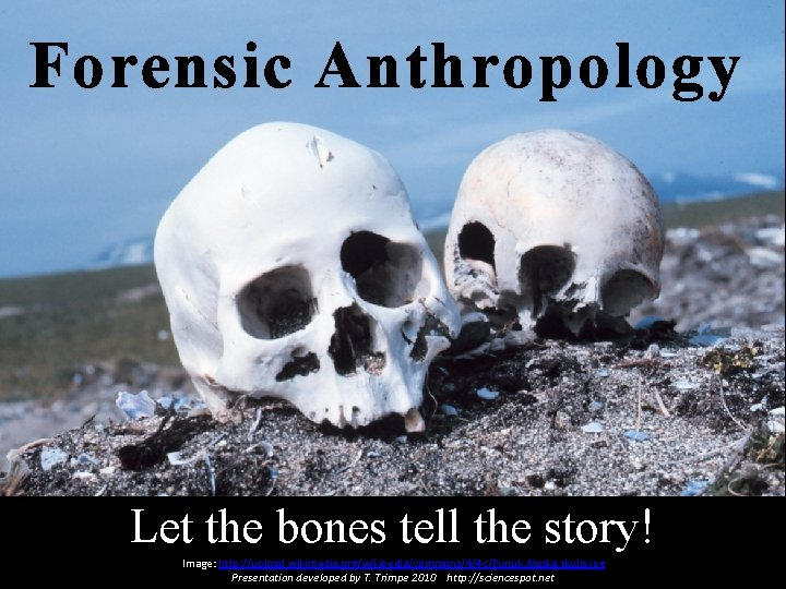 Forensic Anthropology Let the bones tell the story! Image: http: //upload. wikimedia. org/wikipedia/commons/4/4 c/Punuk.