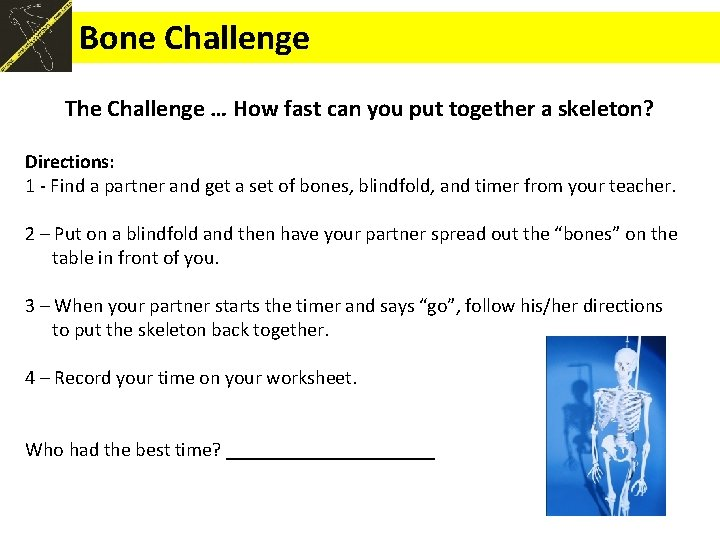 Bone Challenge The Challenge … How fast can you put together a skeleton? Directions: