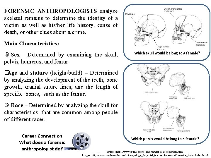FORENSIC ANTHROPOLOGISTS analyze skeletal remains to determine the identity of a victim as well