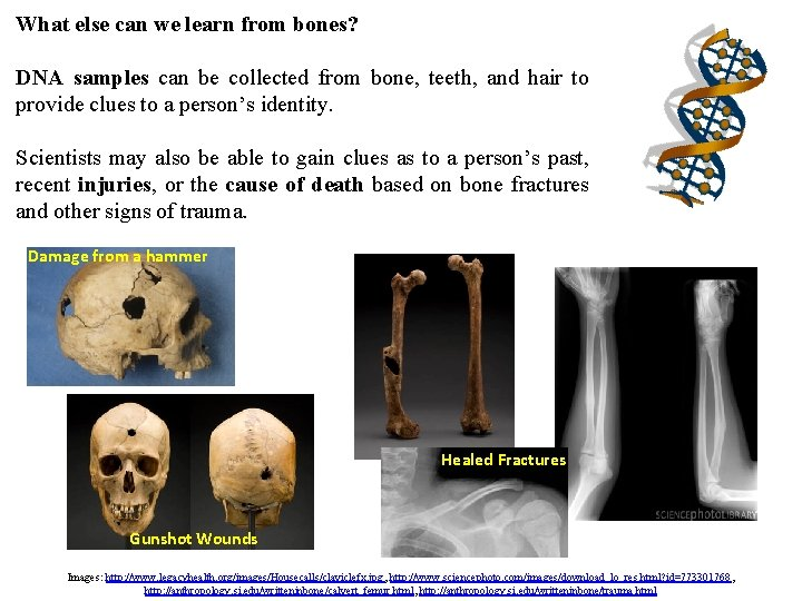 What else can we learn from bones? DNA samples can be collected from bone,