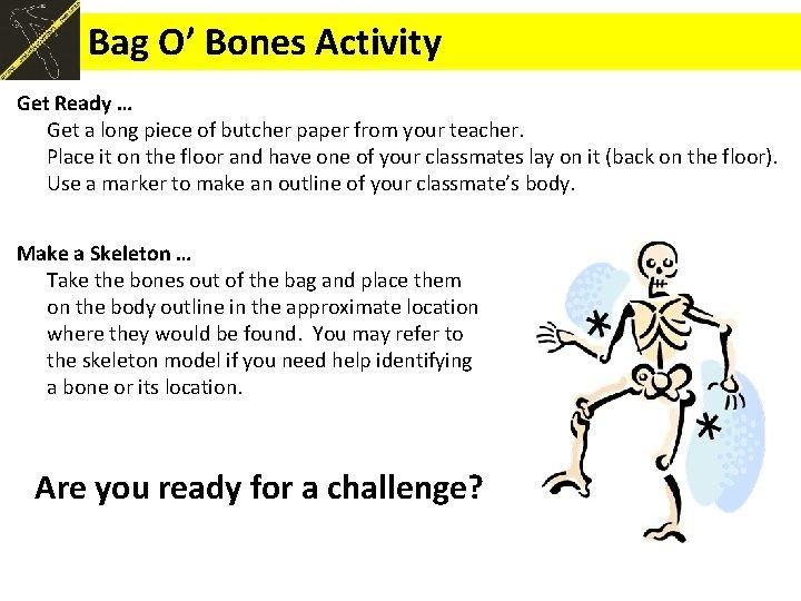 Bag O' Bones Activity Get Ready … Get a long piece of butcher paper
