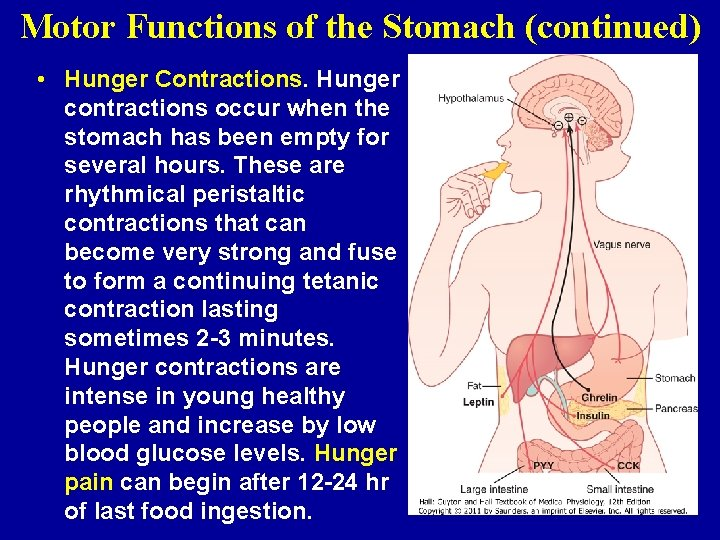 Motor Functions of the Stomach (continued) • Hunger Contractions. Hunger contractions occur when the