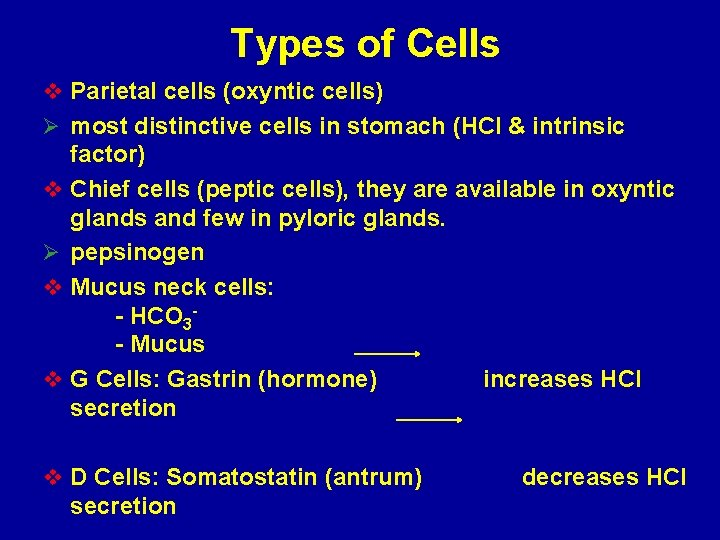 Types of Cells v Parietal cells (oxyntic cells) Ø most distinctive cells in stomach