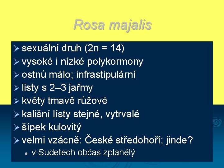 Rosa majalis Ø sexuální druh (2 n = 14) Ø vysoké i nízké polykormony