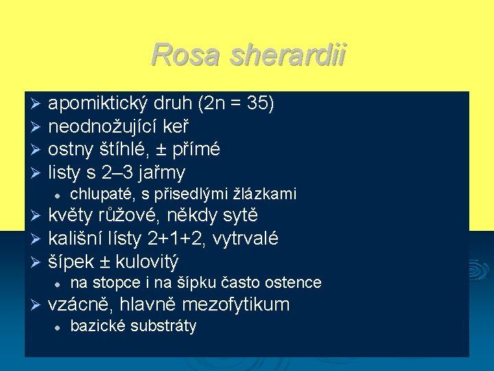 Rosa sherardii Ø Ø apomiktický druh (2 n = 35) neodnožující keř ostny štíhlé,