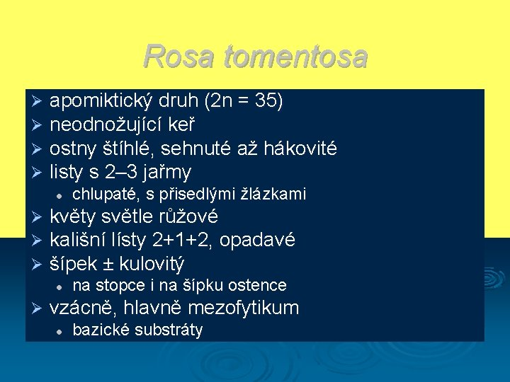 Rosa tomentosa Ø Ø apomiktický druh (2 n = 35) neodnožující keř ostny štíhlé,