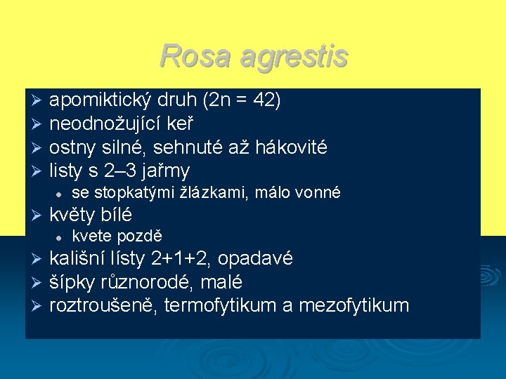 Rosa agrestis Ø Ø apomiktický druh (2 n = 42) neodnožující keř ostny silné,