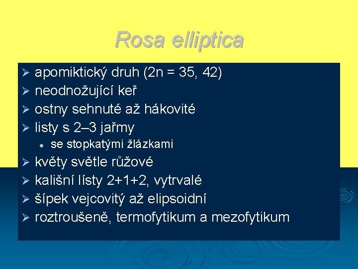 Rosa elliptica apomiktický druh (2 n = 35, 42) Ø neodnožující keř Ø ostny