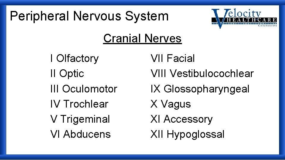 Peripheral Nervous System Cranial Nerves I Olfactory II Optic III Oculomotor IV Trochlear V