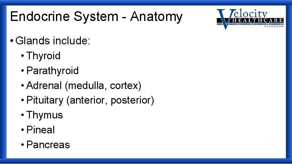 Endocrine System - Anatomy • Glands include: • Thyroid • Parathyroid • Adrenal (medulla,