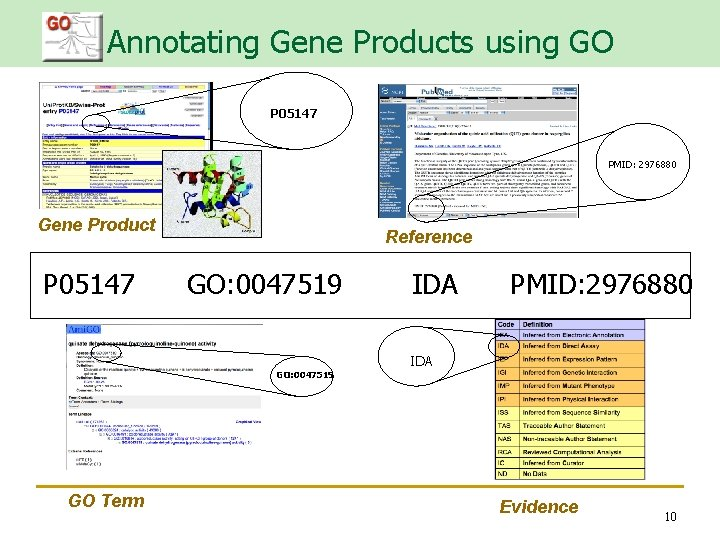 Annotating Gene Products using GO P 05147 PMID: 2976880 Gene Product P 05147 Reference