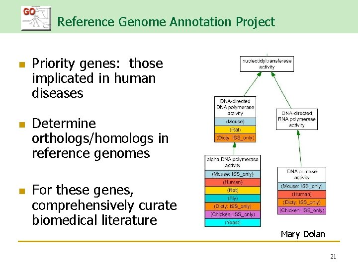 Reference Genome Annotation Project n n n Priority genes: those implicated in human diseases