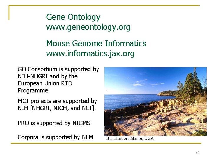 Gene Ontology www. geneontology. org Mouse Genome Informatics www. informatics. jax. org GO Consortium