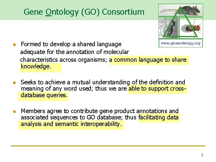 Gene Ontology (GO) Consortium n n n Formed to develop a shared language adequate