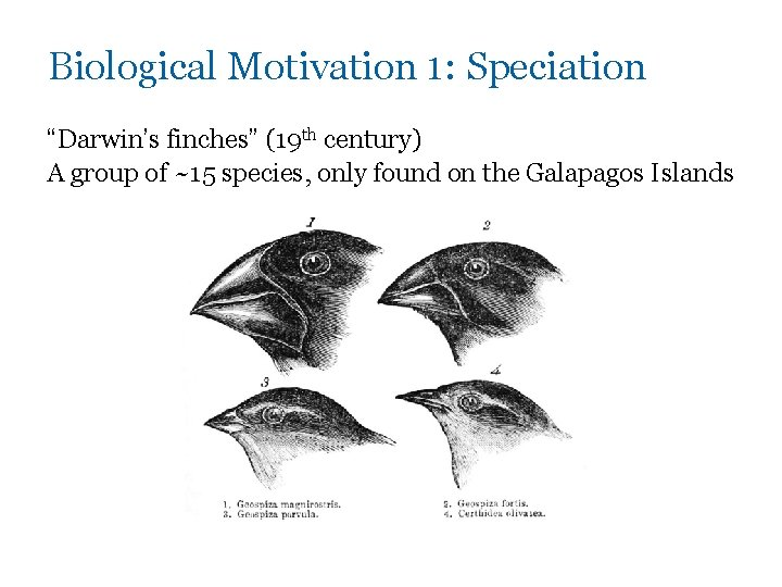 """Biological Motivation 1: Speciation """"Darwin's finches"""" (19 th century) A group of ~15 species,"""