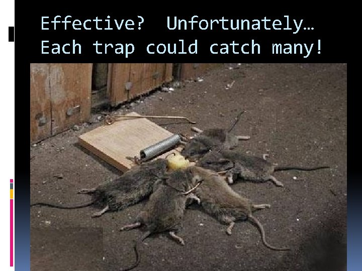 Effective? Unfortunately… Each trap could catch many!
