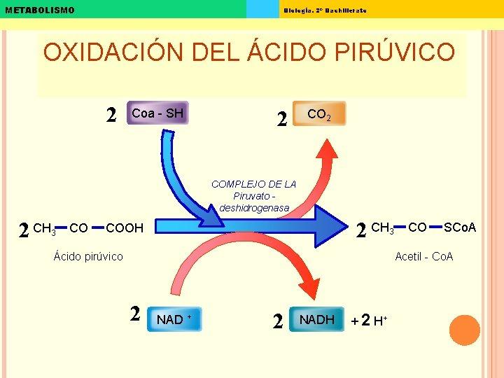 METABOLISMO Biología. 2º Bachillerato OXIDACIÓN DEL ÁCIDO PIRÚVICO 2 Coa - SH 2 COMPLEJO