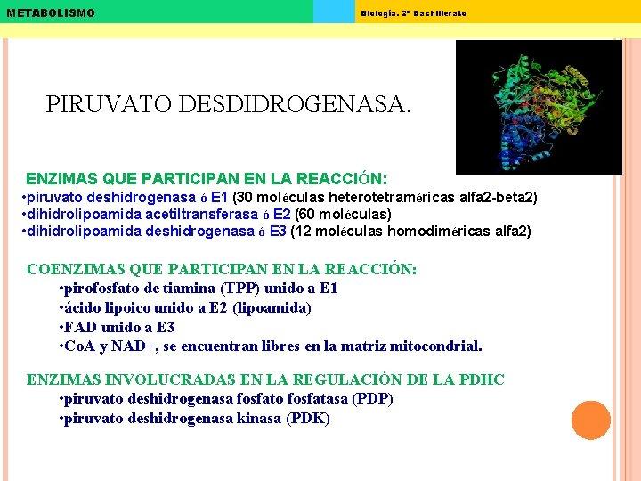 METABOLISMO Biología. 2º Bachillerato PIRUVATO DESDIDROGENASA. ENZIMAS QUE PARTICIPAN EN LA REACCIÓN: • piruvato