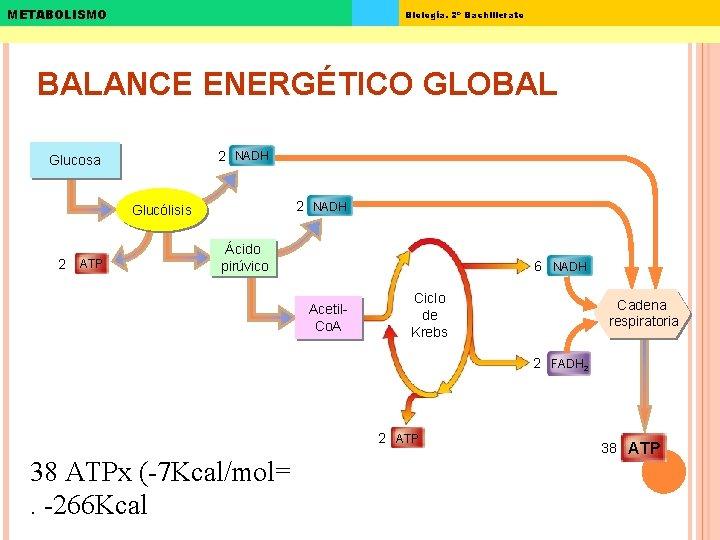 METABOLISMO Biología. 2º Bachillerato BALANCE ENERGÉTICO GLOBAL 2 NADH Glucosa 2 NADH Glucólisis 2