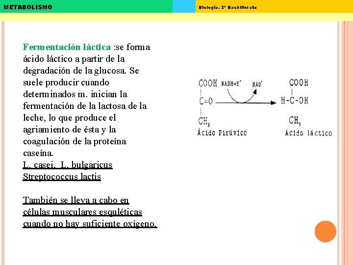 METABOLISMO Fermentación láctica : se forma ácido láctico a partir de la degradación de