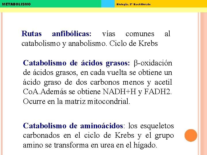 METABOLISMO Biología. 2º Bachillerato Rutas anfibólicas: vías comunes al catabolismo y anabolismo. Ciclo de