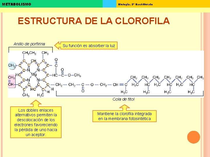 METABOLISMO Biología. 2º Bachillerato ESTRUCTURA DE LA CLOROFILA Anillo de porfirina Su función es