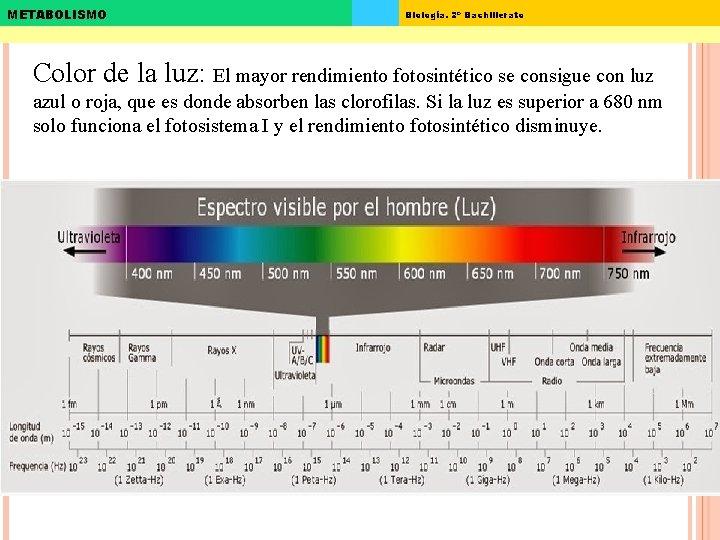 METABOLISMO Biología. 2º Bachillerato Color de la luz: El mayor rendimiento fotosintético se consigue