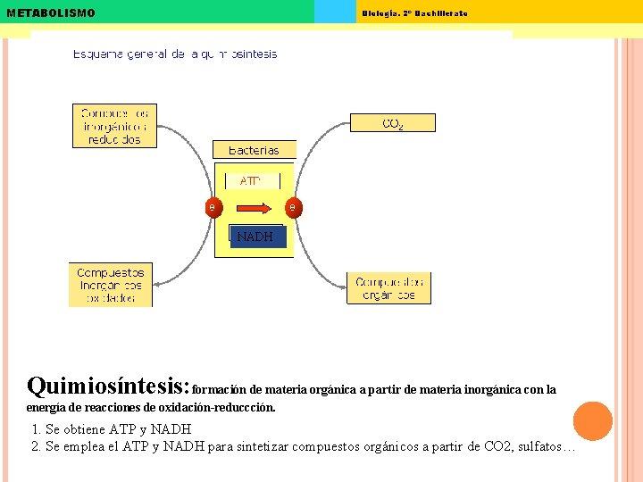 METABOLISMO Biología. 2º Bachillerato NADH Quimiosíntesis: formación de materia orgánica a partir de materia