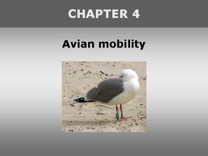 CHAPTER 4 Avian mobility