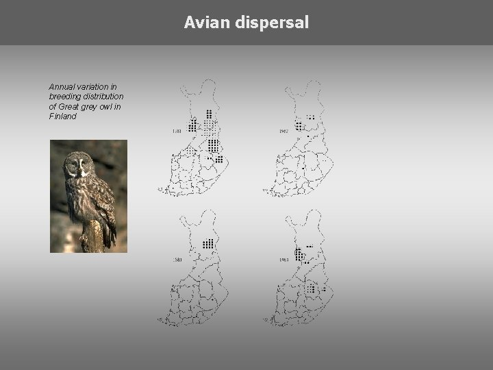 Avian dispersal Annual variation in breeding distribution of Great grey owl in Finland