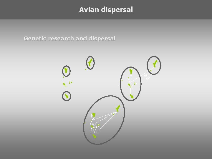 Avian dispersal Genetic research and dispersal Nr 7 16