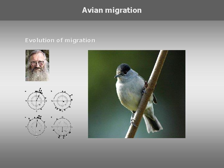Avian migration Evolution of migration