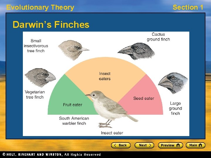 Evolutionary Theory Darwin's Finches Section 1