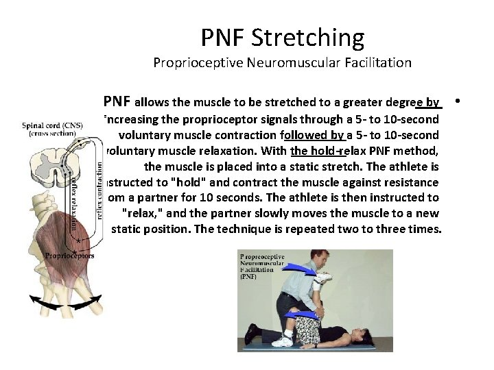 PNF Stretching Proprioceptive Neuromuscular Facilitation PNF allows the muscle to be stretched to a