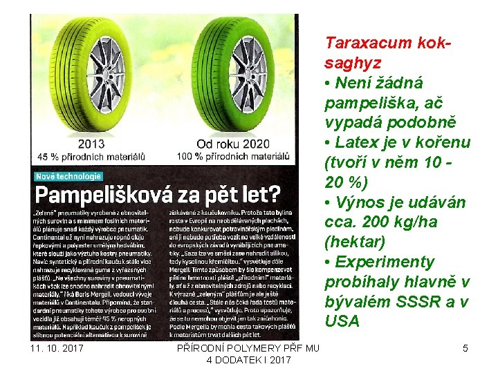 Taraxacum koksaghyz • Není žádná pampeliška, ač vypadá podobně • Latex je v kořenu