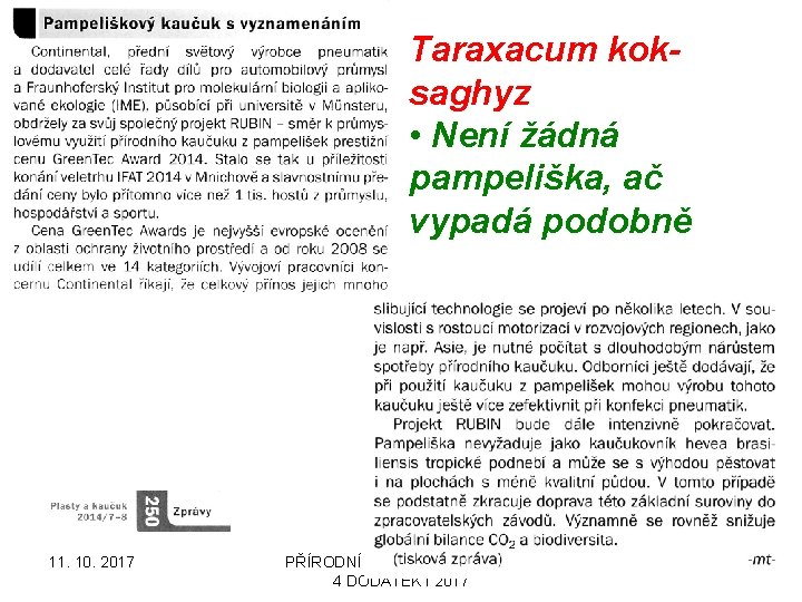 Taraxacum koksaghyz • Není žádná pampeliška, ač vypadá podobně 11. 10. 2017 PŘÍRODNÍ POLYMERY