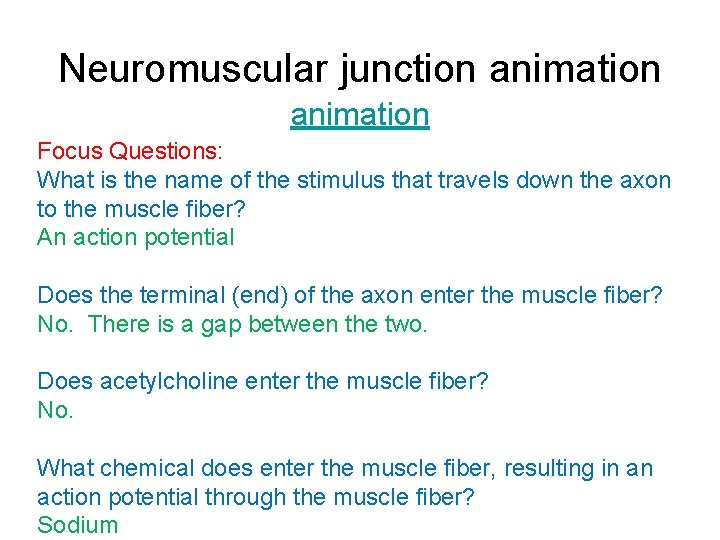 Neuromuscular junction animation Focus Questions: What is the name of the stimulus that travels