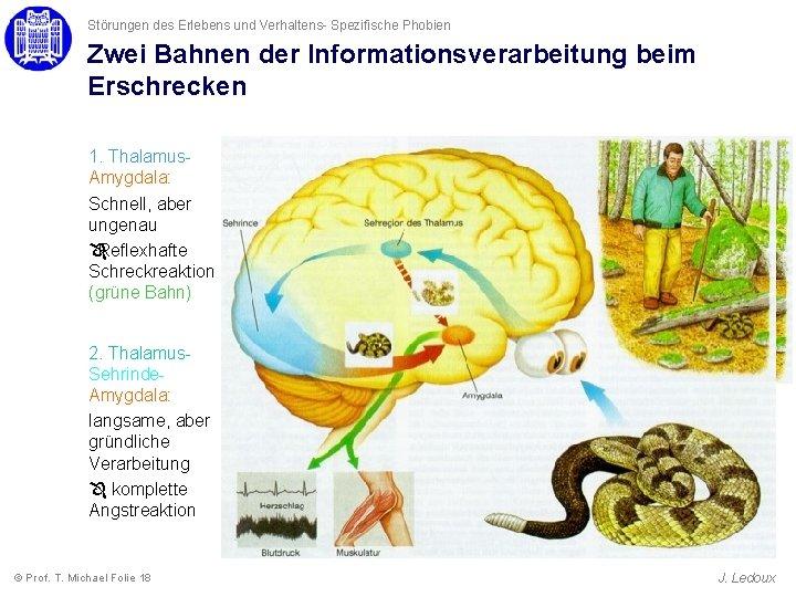 Störungen des Erlebens und Verhaltens- Spezifische Phobien Zwei Bahnen der Informationsverarbeitung beim Erschrecken 1.