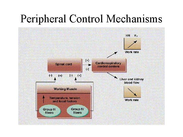 Peripheral Control Mechanisms