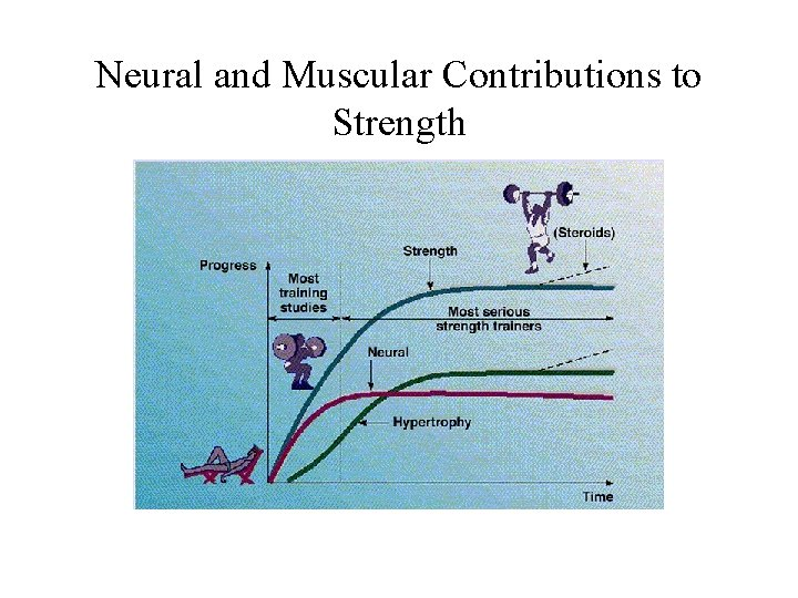 Neural and Muscular Contributions to Strength
