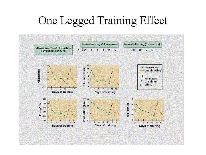 One Legged Training Effect