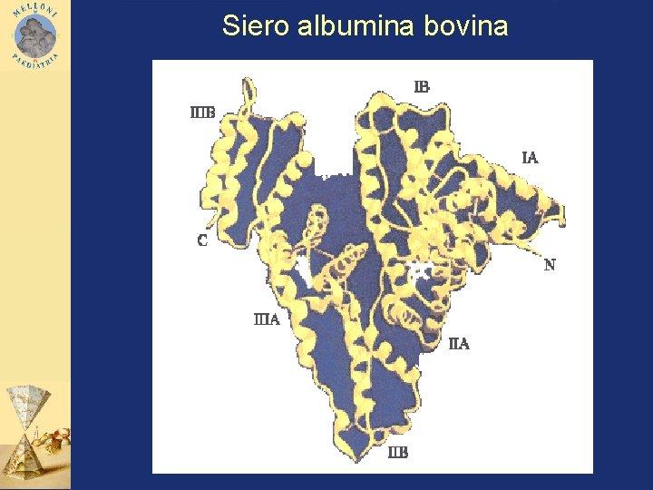 Siero albumina bovina