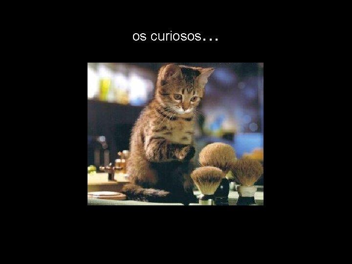 os curiosos. . .