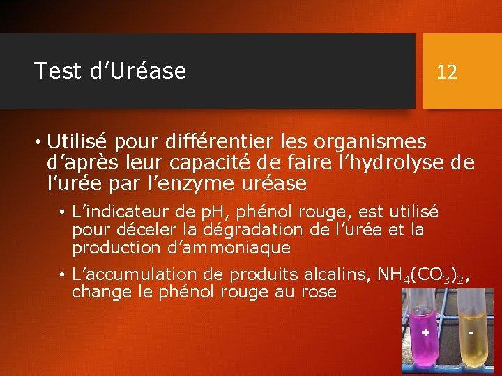 Test d'Uréase 12 • Utilisé pour différentier les organismes d'après leur capacité de faire