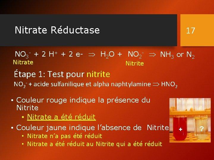 Nitrate Réductase 17 NO 3 - + 2 H+ + 2 e- H 2