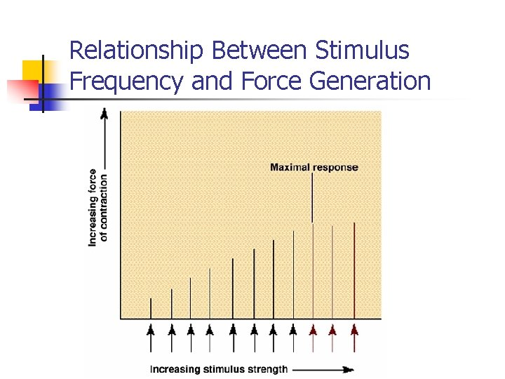 Relationship Between Stimulus Frequency and Force Generation