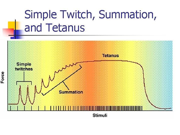 Simple Twitch, Summation, and Tetanus
