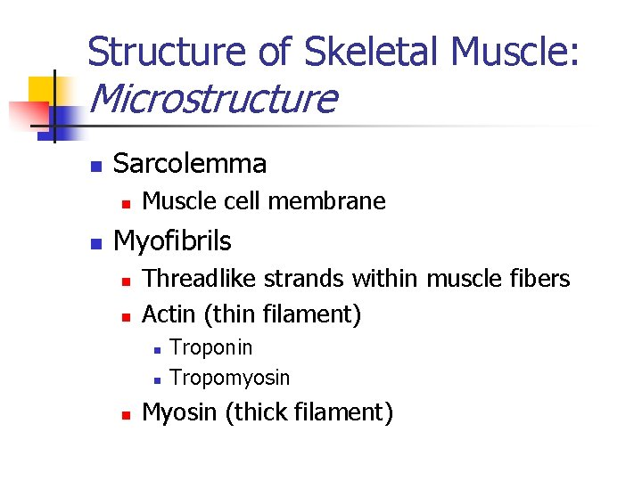 Structure of Skeletal Muscle: Microstructure n Sarcolemma n n Muscle cell membrane Myofibrils n