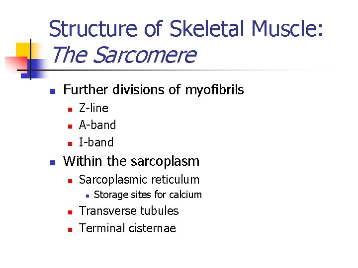 Structure of Skeletal Muscle: The Sarcomere n Further divisions of myofibrils n n Z-line